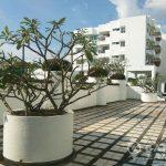 Sammakorn Condominium Renovated Spacious High Floor 1 Bed 1 Bath to Rent